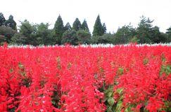 大分県くじゅう花公園
