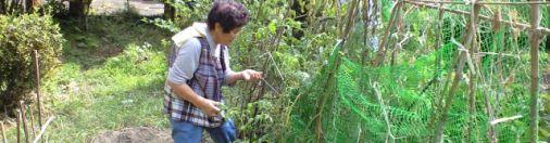 大分で自然農業と向き合う旅路