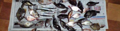大分県臼杵市黒島前の防波堤での釣果