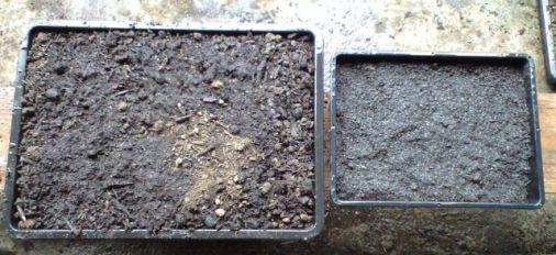 卑弥呼の土と無加工の土の実験を開始