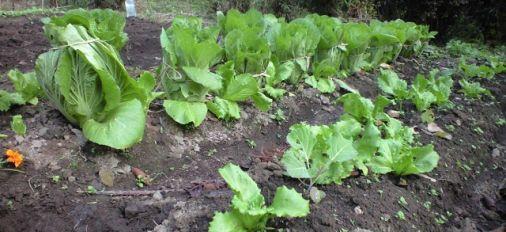 野菜を栽培して1年が過ぎました