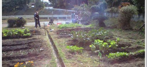 竹田直入にある野菜畑成長中