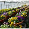 室内栽培でも栄養分の高い土