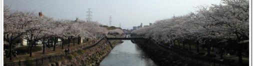大分人と緑ふれあいいちと桜