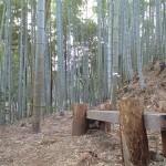 竹林内にポツリある木椅子