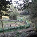 菖蒲園(ショウブ)
