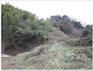 五三竹の森を整備