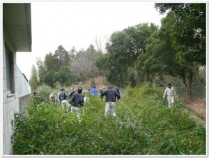 伐採した竹に埋もれる野球部