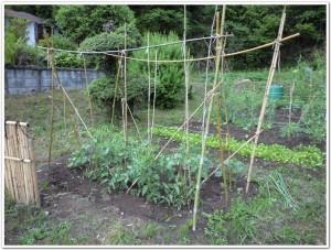 成長する野菜たち
