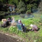 家族の菜園