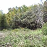 草に覆われた環境
