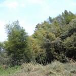 草木に覆われている環境