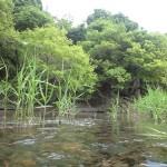 清流河原内川
