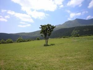 久住連山を眺める