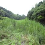 河川敷のまわりを草刈