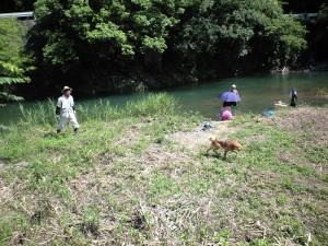 犬も一緒に川遊び
