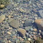 高い透明度の川
