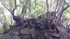 大船山への道