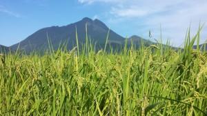 由布岳と田園