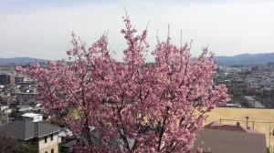 春花2016