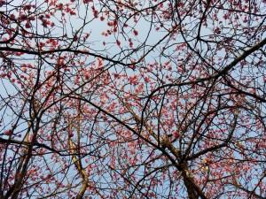 咲く時に気づく